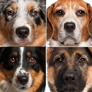 самые продаваемые породы собак