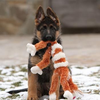 С чего начать дрессировку щенка? Служебное собаководство