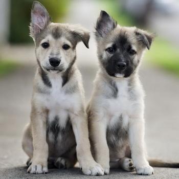 Социализация собаки, воспитание и дрессировка взрослой собаки и щенка в  разные периоды жизни