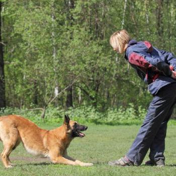 Лептоспироз у собак симптомы и признаки на фото лечение