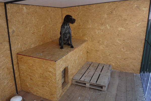 Содержание курцхаара в квартире и на улице: чем кормить щенков и взрослых собак, как ухаживать